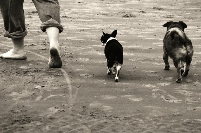 walking-beach-1582191_1920